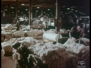 Cotton Workers, 1950s