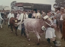 Country Show, 1950s