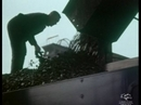 Man Shovelling Coal, 1950s